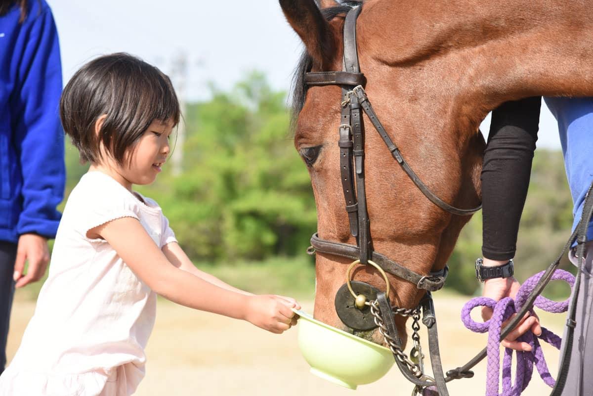 馬とふれあい体験 ハーモニーファーム淡路