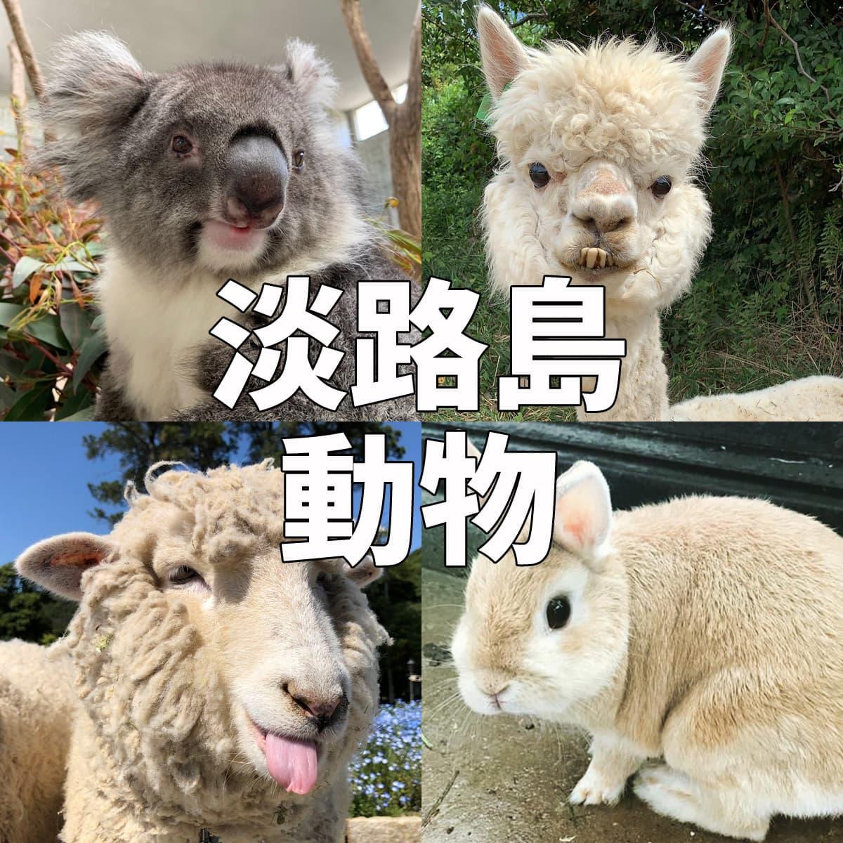 淡路島 動物ふれあいスポット