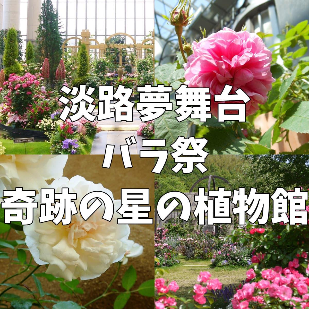 淡路島バラ(薔薇)奇跡の星の植物館
