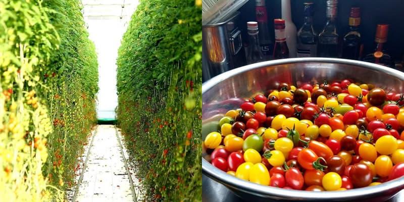 トマト農園 レストラン&カフェ「グリナリウム淡路島」