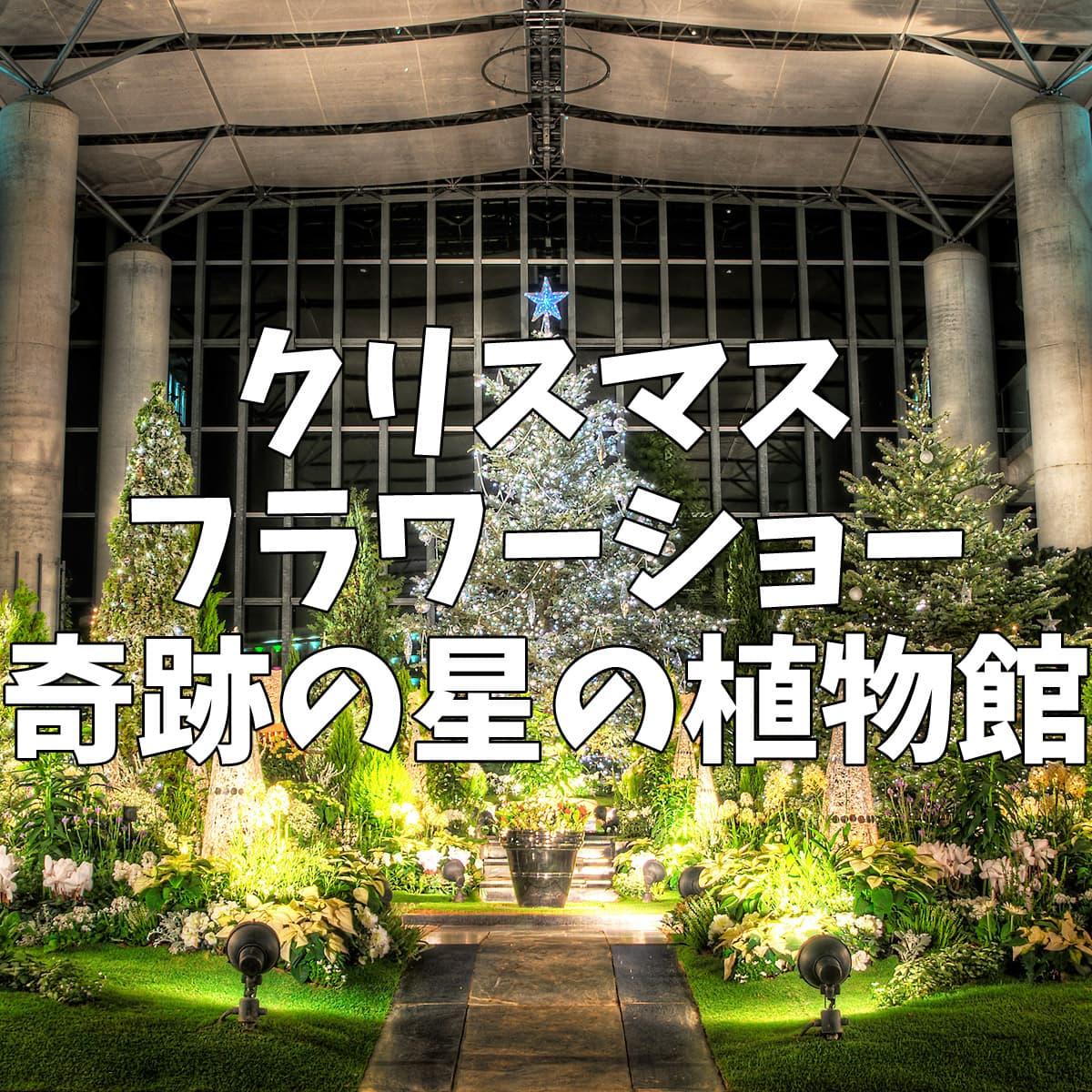 クリスマスフラワーショー奇跡の星の植物館