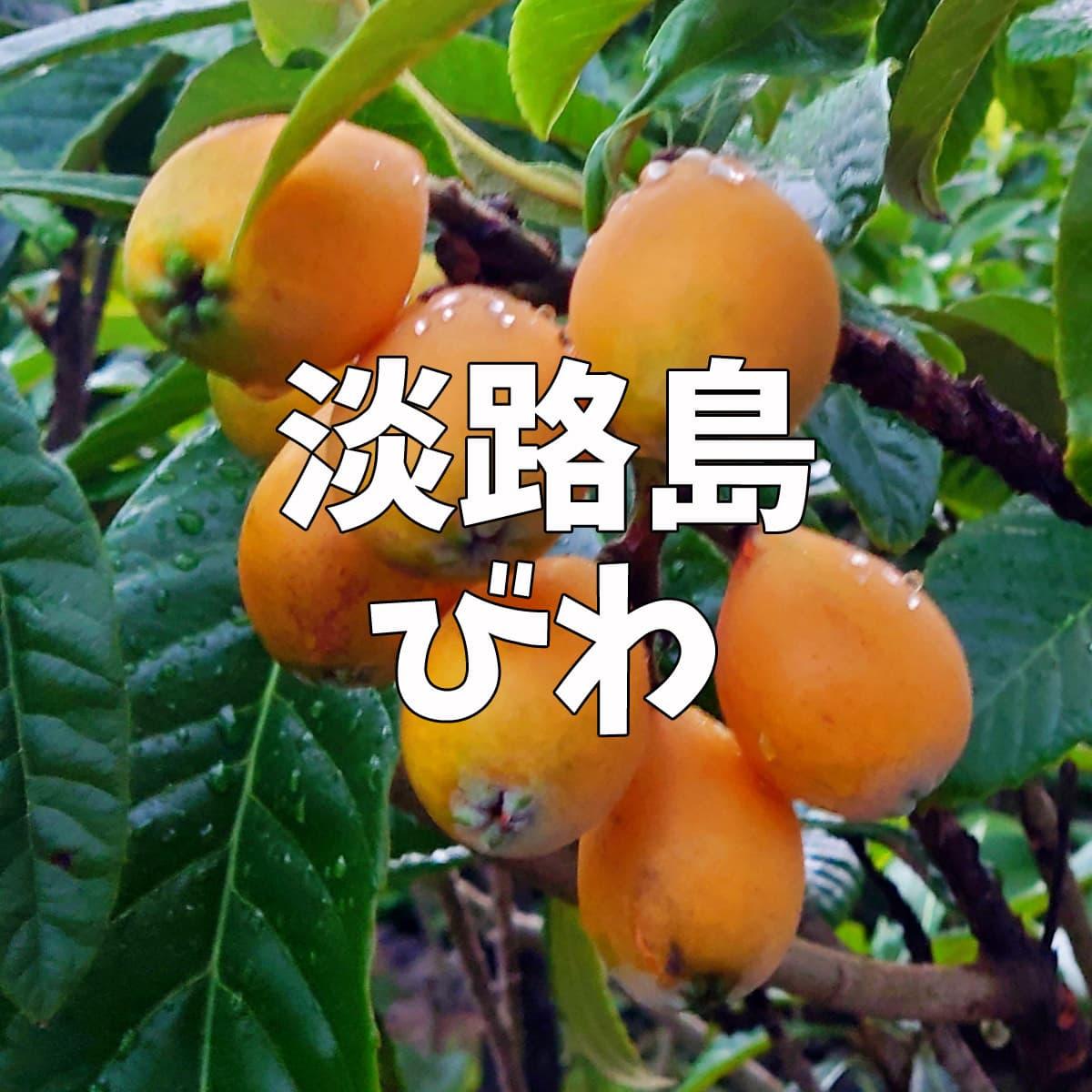 淡路島びわ